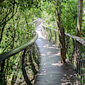 Tree Canopy Walkway At Kirstenbosch National Botanical Garden by Rob Huntley