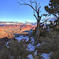 Tree Frames The Grand Canyon by Chance Kafka