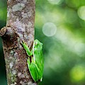 Tree Frog And Bokeh by Keith Smith