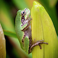 Tree Frog Blending In 02 by KG Photography