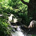 Tree Near Waterfall Chicago Botanical Garden by Colleen Cornelius
