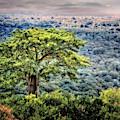 Tree Of Life by Scott Kemper