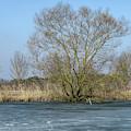 Tree On Frozen Lake by Elisabeth Lucas
