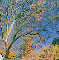 Tree Reflections by Jonathan Hansen