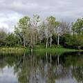 Tree Reflections by Linda Vanoudenhaegen