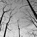 Tree Series 2 by Jeni Gray