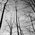 Tree Series 3 by Jeni Gray