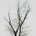 Tree Series Five by Hyuntae Kim