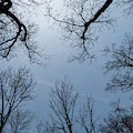 Tree Silhouettes by Jean Noren