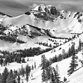 Trees At Rendezvous Peak Black And White by Adam Jewell