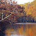 Trees At The Water's Edge by Mike Murdock