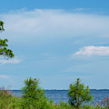 Trees By The Water by Robert Anderson