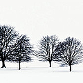 Trees In A Snowy Field In Chatsworth by John Doornkamp / Design Pics