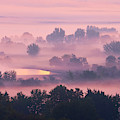 Trees In The Mist by Whitney Goodey