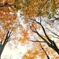 Trees Looking Up by Jim Lepard