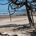 Trees On The Beach by Robert Potts