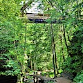 Triangle Bridge At Hocking Hills State Park Vertical by Lisa Wooten