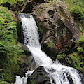 Triberg Waterfalls Portrait by Wendy Payne Travel Writer