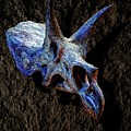 Triceratops Horridus Skull 2 by Weston Westmoreland