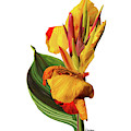 Tropical Bouquet-flower One by Kandyce Waltensperger