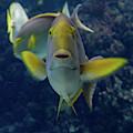 Tropical Fish Poses. by Anjo Ten Kate
