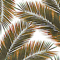 Tropical Palm Leaf Pattern 6 - Tropical Wall Art - Summer Vibes - Modern, Minimal - Brown, Copper by Studio Grafiikka