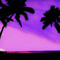 Tropical Pink Sunset by D Hackett