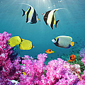 Tropical Reef Fish Over Soft Corals by Georgette Douwma
