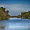 Tropical River by Judy Hall-Folde
