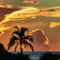 Tropical Summer Nights by Susan Molnar
