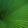 Tropical Leaf by Emily Johnson