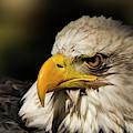 True Strength - Eagle Art by Jordan Blackstone