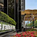 Trump International Hotel by Susan Candelario
