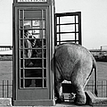 Trunk Call by John Drysdale