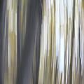 Trunks 2 by John Meader