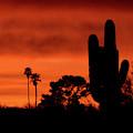 Tucson's Natural Skyline by Chance Kafka