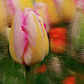 Tulip Distraction by Jean Noren