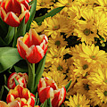 Tulips And Daisies by Jeff Severson
