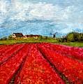 Tulips Farms by Asha Sudhaker Shenoy