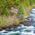 Tumalo Creek by David Millenheft