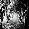 Tunnel Of Trees by Michelle Mcmahon