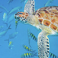 Turtle And Fish by Mark Hunter