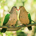 Two Colourful Doves Resting Outside On A Branch. by Rob D Imagery