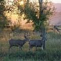 Two Deer Sunset by Susan Brown