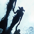 Two Mermaids And Merman Holding Hands by Zena Holloway