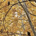 Two Owls In Autumn Tree by Carol Groenen