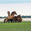 Two Stallions Getting Into Fight Over A Mare by Dan Friend