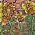Two Toned Daffodils by Laurie Morgan
