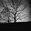 Two Tree Silhouette by Doug Camara