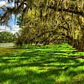 Under The Shadows Tomotley Plantation Live Oaks South Carolina Art by Reid Callaway
